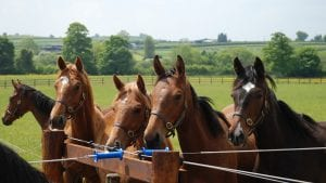 riding summer camp equitazione Inghilterra vacanze studio 2018 VIVA International